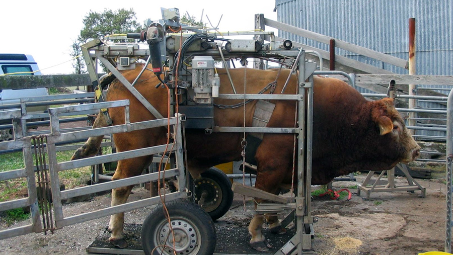 Hoof Trimming Chutes